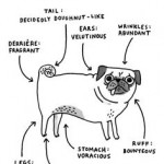 If the last picture is a map to me, this is certainly a map to the pug!